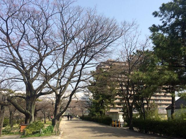 syukugawa20150322_02